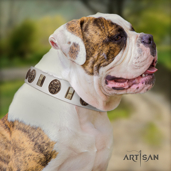 American Bulldog easy wearing genuine leather collar with adornments for your dog