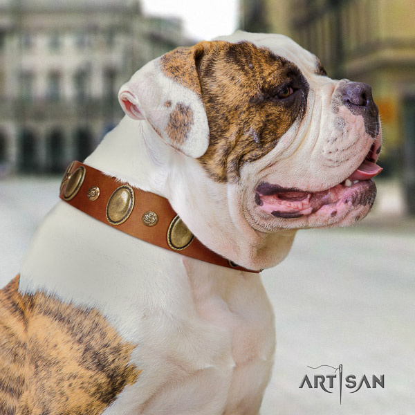 American Bulldog stylish walking natural leather collar with decorations for your pet