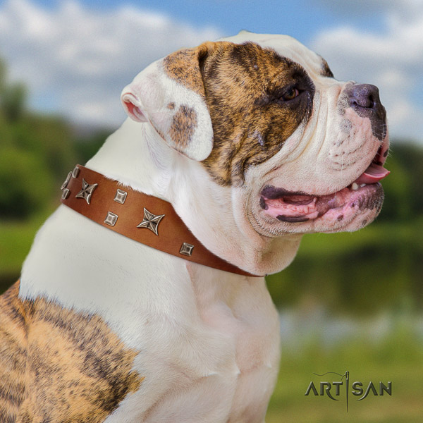 American Bulldog easy wearing genuine leather collar with studs for your pet