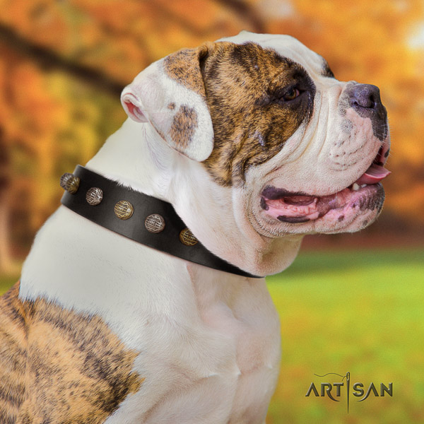American Bulldog handy use full grain leather collar with studs for your four-legged friend