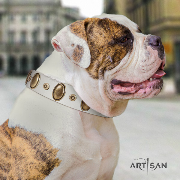 American Bulldog basic training full grain genuine leather collar with adornments for your dog
