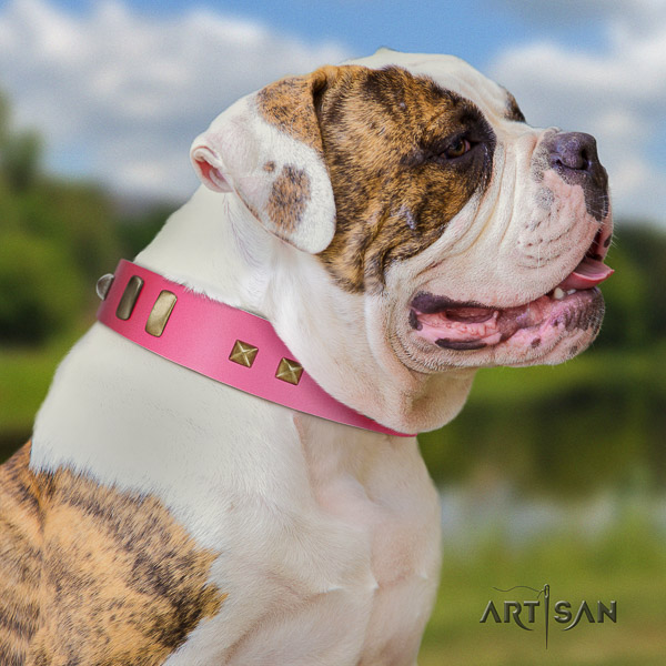 American Bulldog everyday walking natural leather collar with embellishments for your four-legged friend