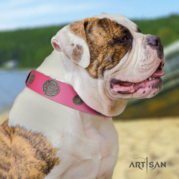 American Bulldog fancy walking genuine leather collar with adornments for your pet