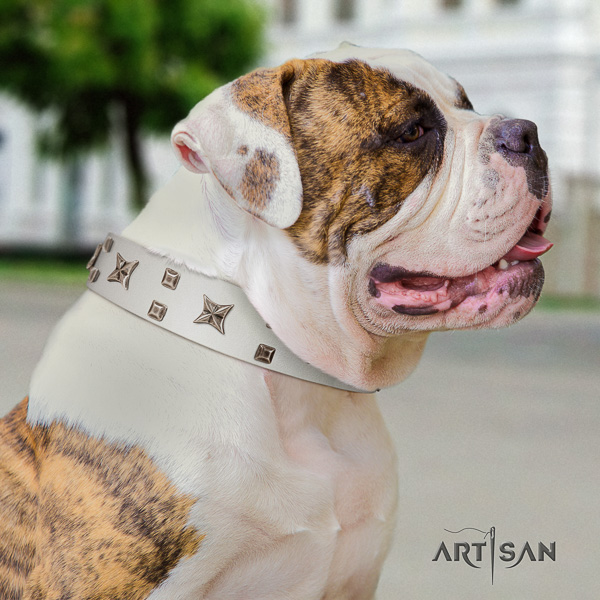 American Bulldog everyday use full grain genuine leather collar with embellishments for your doggie