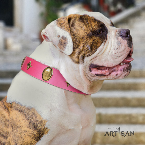 American Bulldog daily walking full grain natural leather collar with studs for your four-legged friend