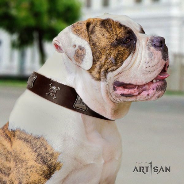American Bulldog walking natural leather collar with studs for your four-legged friend