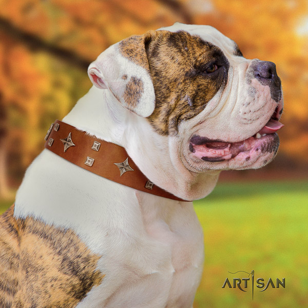 American Bulldog comfortable wearing full grain genuine leather collar with decorations for your dog