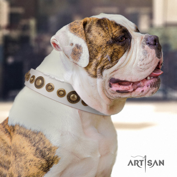 American Bulldog embellished full grain leather dog collar with incredible studs