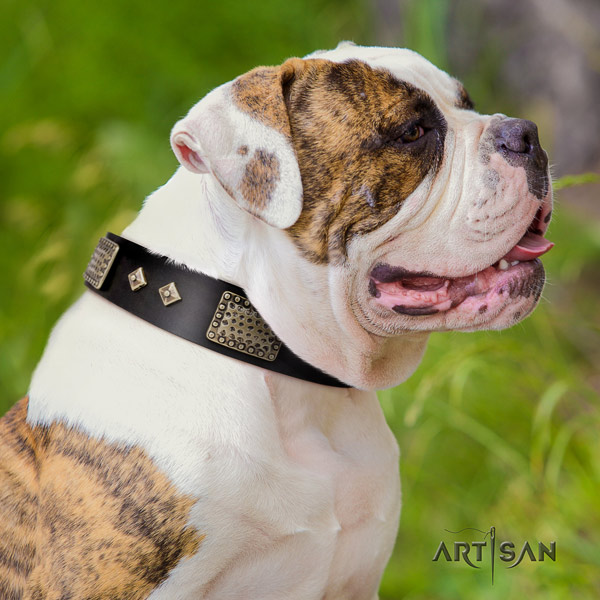 American Bulldog embellished leather dog collar with top notch embellishments
