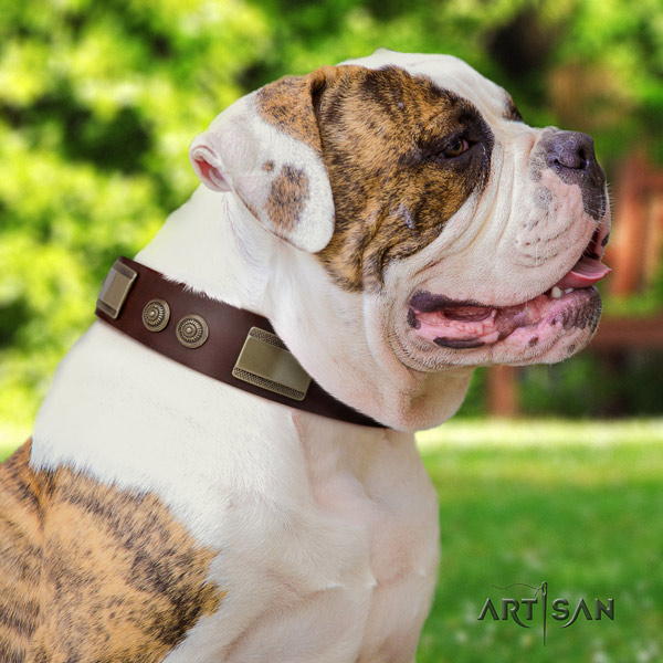 American Bulldog adorned leather dog collar with exceptional decorations