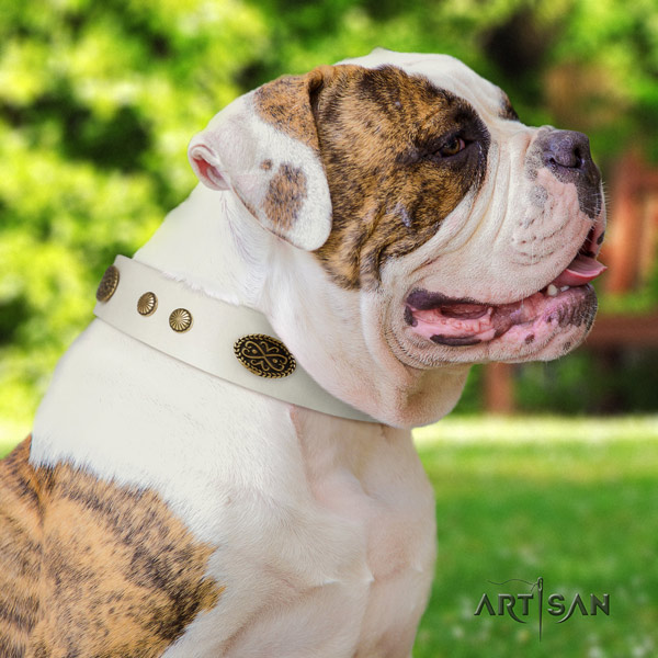 American Bulldog decorated genuine leather dog collar with fashionable studs