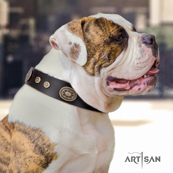 American Bulldog embellished leather dog collar with unique adornments