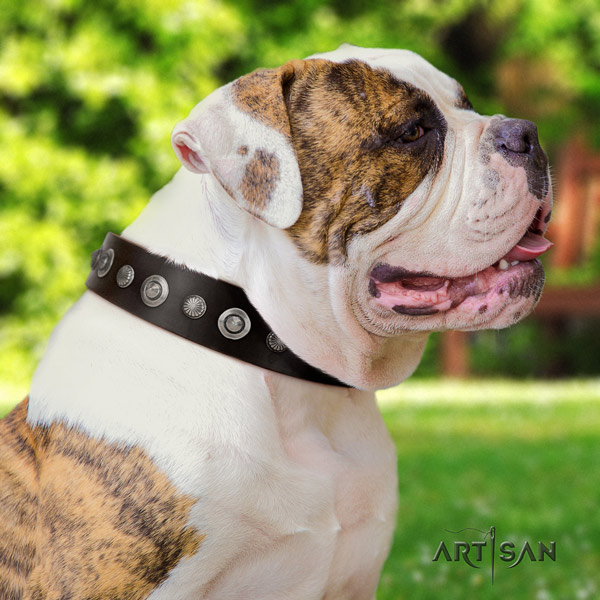 American Bulldog decorated genuine leather dog collar with unique decorations