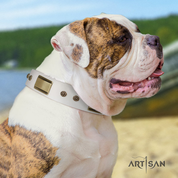 American Bulldog decorated full grain leather dog collar with top notch decorations