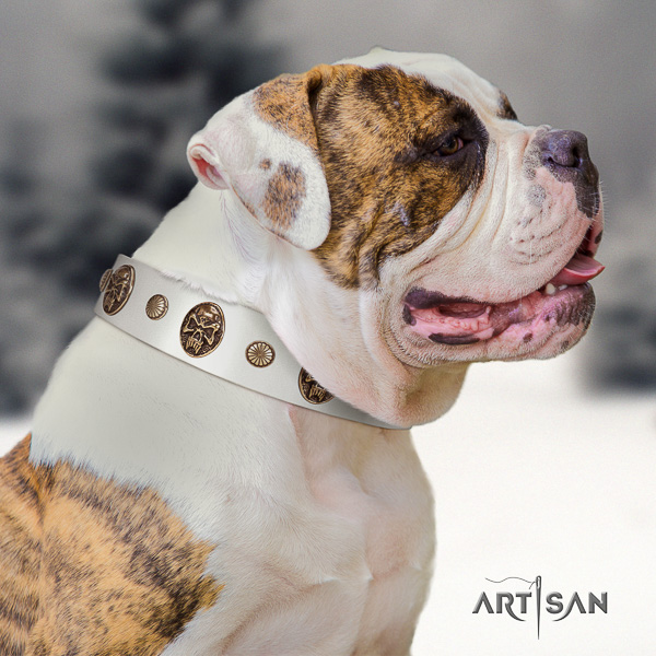 American Bulldog walking natural leather collar with embellishments for your pet
