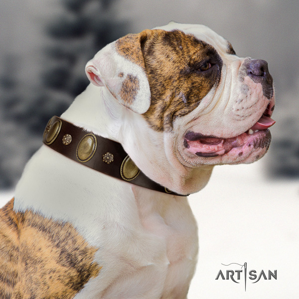 American Bulldog easy wearing genuine leather collar with decorations for your canine
