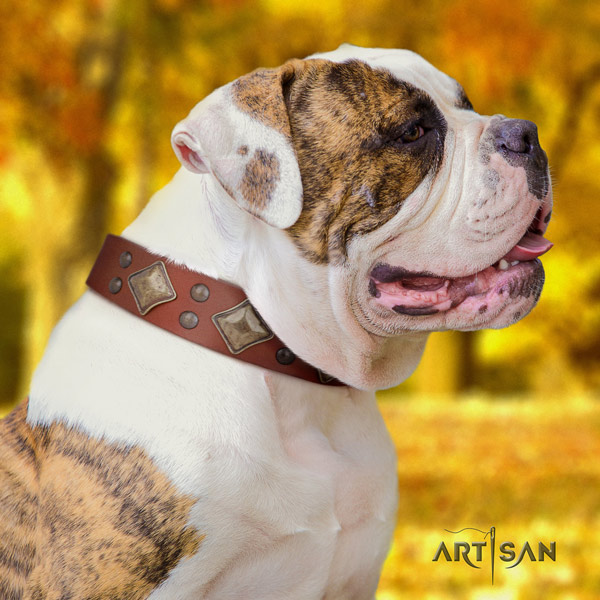 American Bulldog adorned full grain leather dog collar with trendy studs