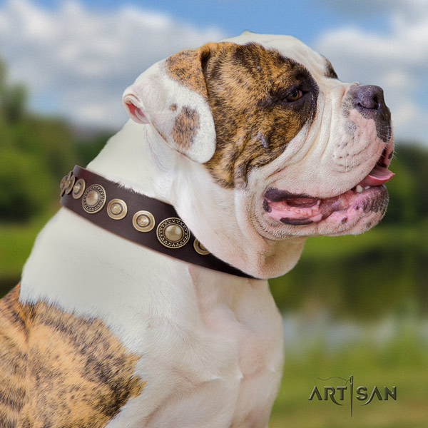 American Bulldog studded full grain leather dog collar with remarkable decorations