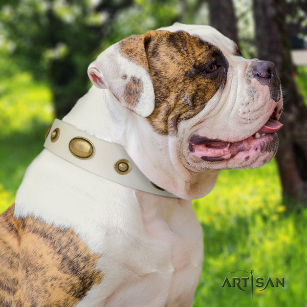 American Bulldog studded full grain leather dog collar with fashionable adornments