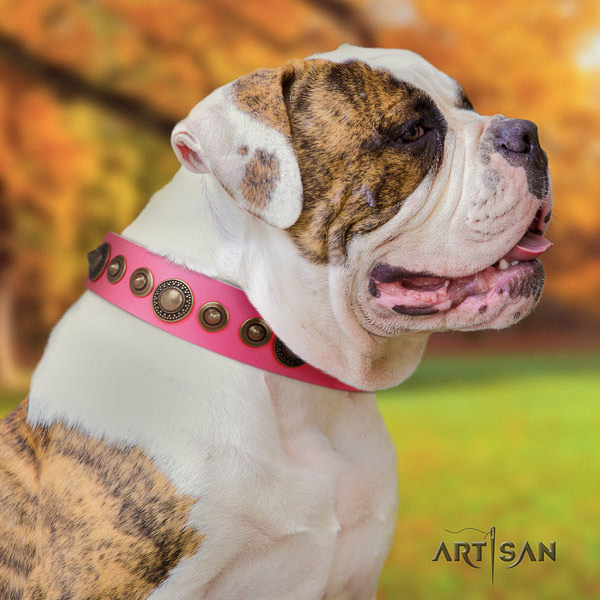 American Bulldog studded genuine leather dog collar with exquisite adornments