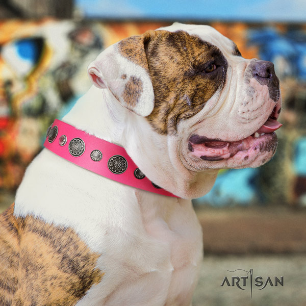 American Bulldog adorned full grain leather dog collar with trendy adornments