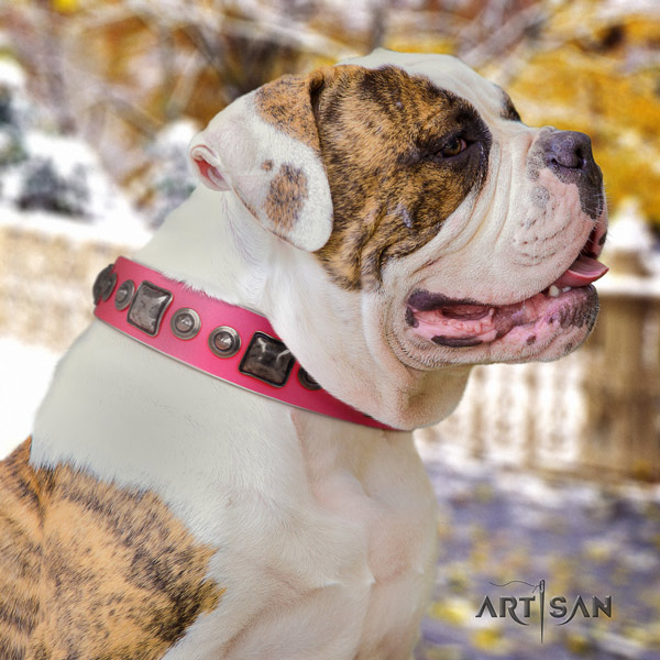 American Bulldog decorated full grain leather dog collar with top notch embellishments