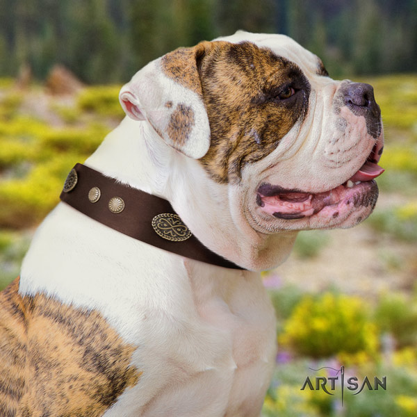 American Bulldog studded full grain leather dog collar with stunning studs