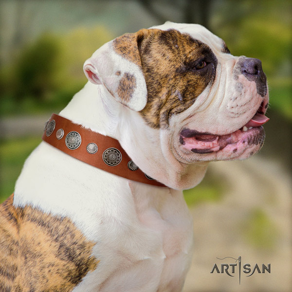 American Bulldog decorated leather dog collar with awesome adornments