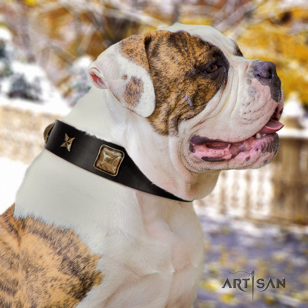 American Bulldog basic training genuine leather collar with studs for your four-legged friend
