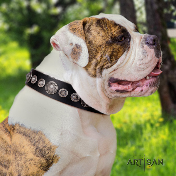 American Bulldog adorned leather dog collar with exquisite adornments