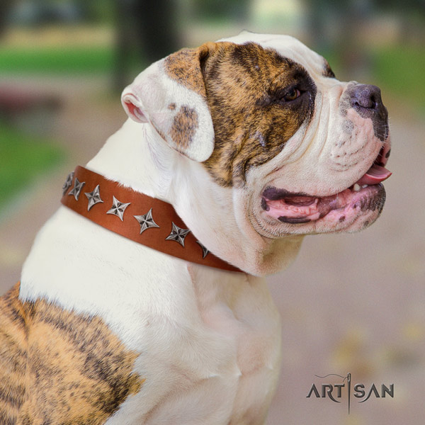 American Bulldog decorated genuine leather dog collar with unique studs