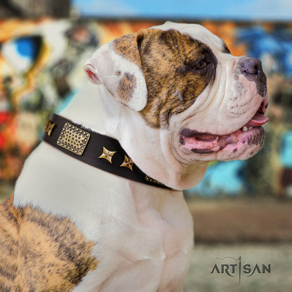 American Bulldog decorated genuine leather dog collar with top notch adornments