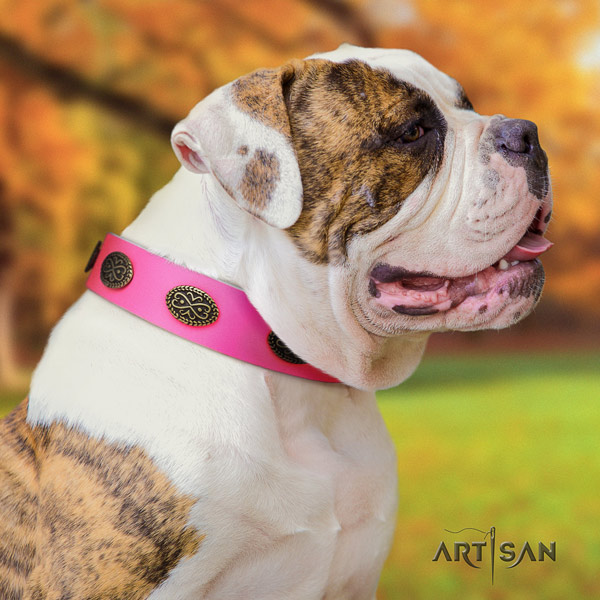 American Bulldog decorated genuine leather dog collar with remarkable adornments