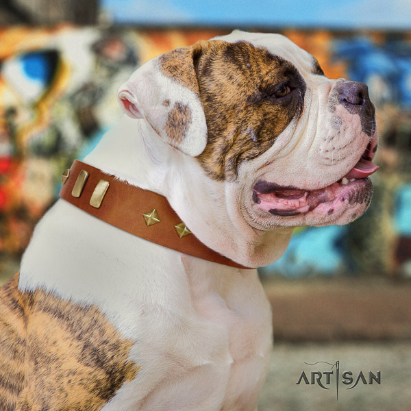 American Bulldog daily walking full grain genuine leather collar with studs for your four-legged friend