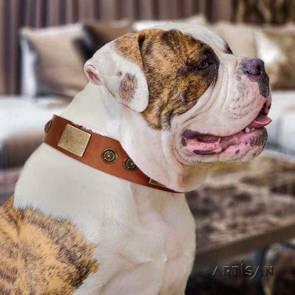 American Bulldog basic training full grain genuine leather collar with decorations for your doggie