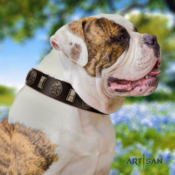 American Bulldog daily walking genuine leather collar with decorations for your four-legged friend