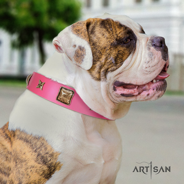 American Bulldog everyday walking full grain leather collar with adornments for your four-legged friend