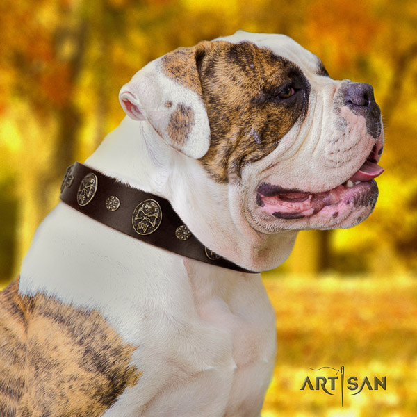 American Bulldog easy wearing full grain leather collar with decorations for your four-legged friend