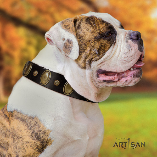 American Bulldog comfy wearing full grain natural leather collar with adornments for your pet