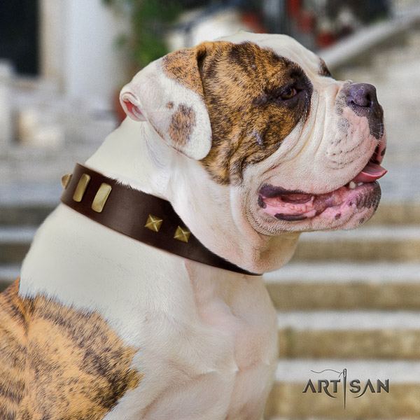 American Bulldog daily use full grain leather collar with decorations for your doggie