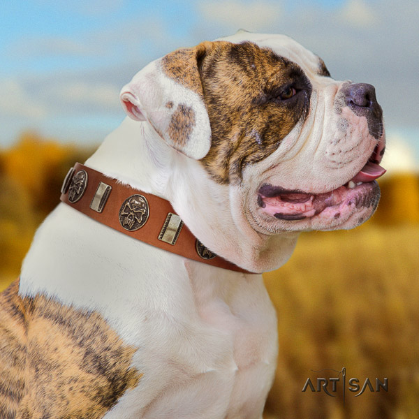 American Bulldog walking full grain genuine leather collar with decorations for your doggie