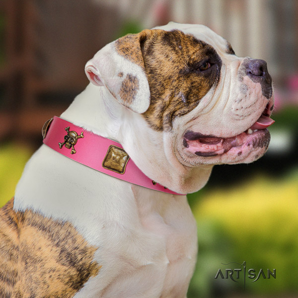 American Bulldog stylish walking full grain natural leather collar with adornments for your pet