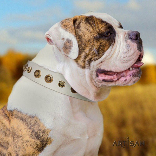 American Bulldog comfortable wearing natural leather collar with decorations for your dog