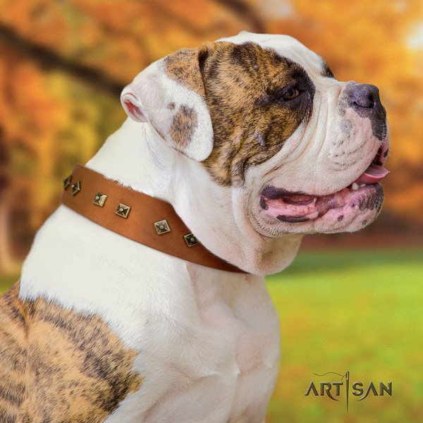 American Bulldog decorated leather dog collar with fashionable decorations