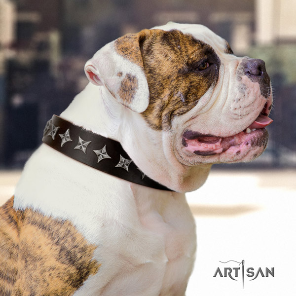 American Bulldog decorated genuine leather dog collar with impressive decorations