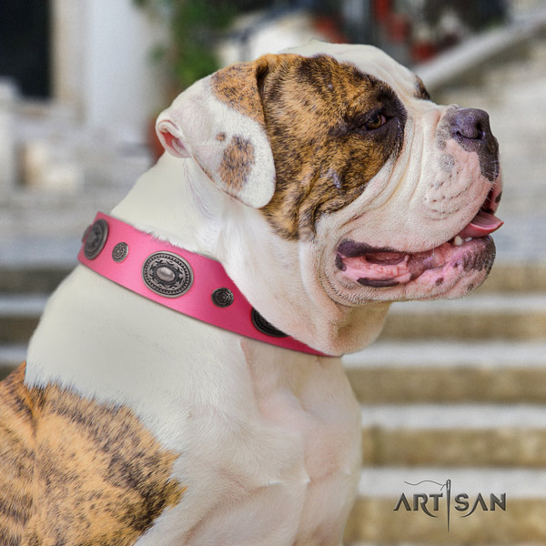 American Bulldog embellished genuine leather dog collar with significant embellishments