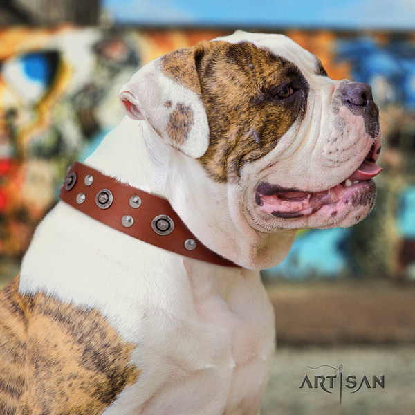 American Bulldog studded genuine leather dog collar with awesome studs