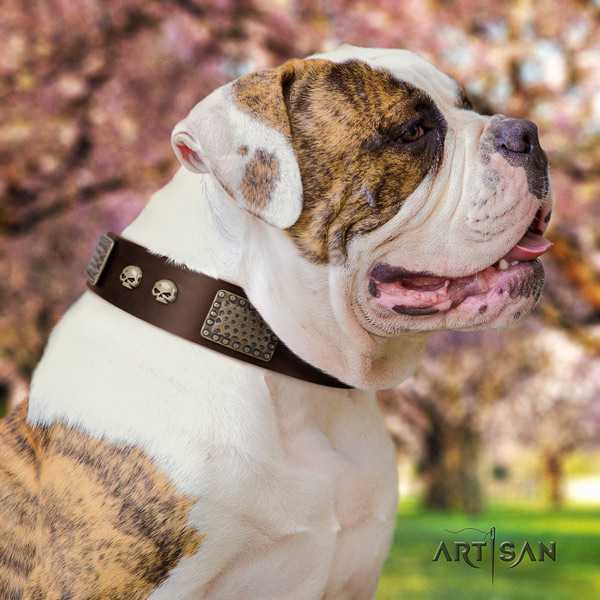 American Bulldog decorated genuine leather dog collar with awesome embellishments