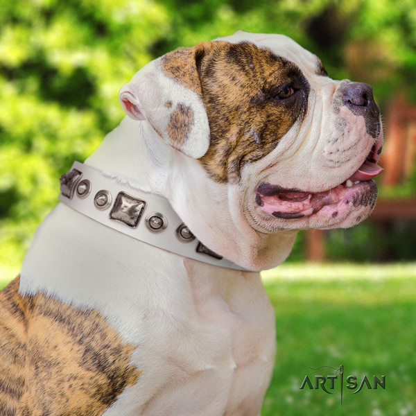 American Bulldog studded leather dog collar with awesome decorations