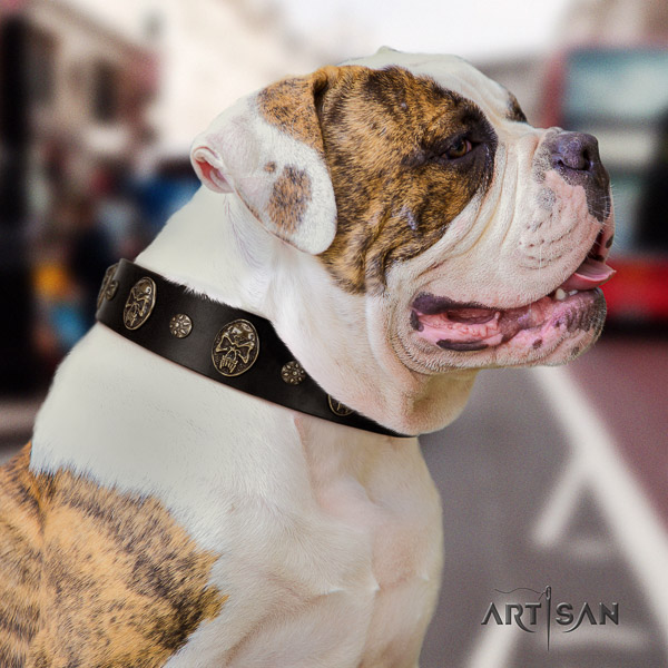 American Bulldog fancy walking full grain natural leather collar with decorations for your dog